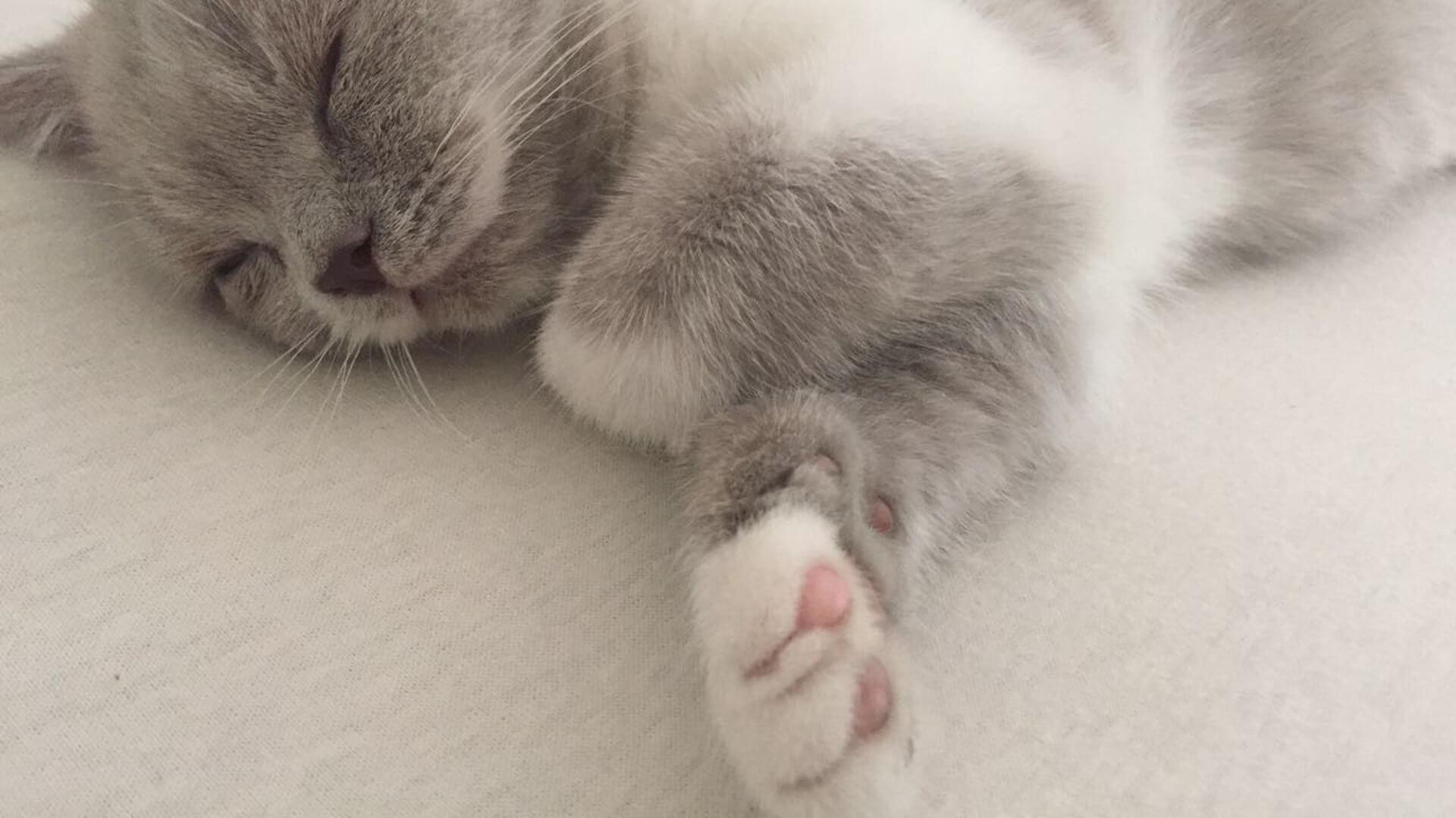 Bett mit schlafender Katze